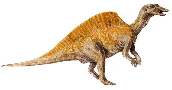 ouranosaurus Clinic